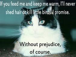 images cat